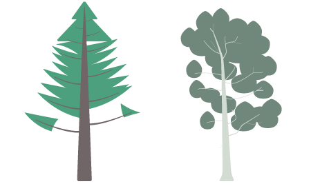 Douglas Fir and Tingiringi Gum icons